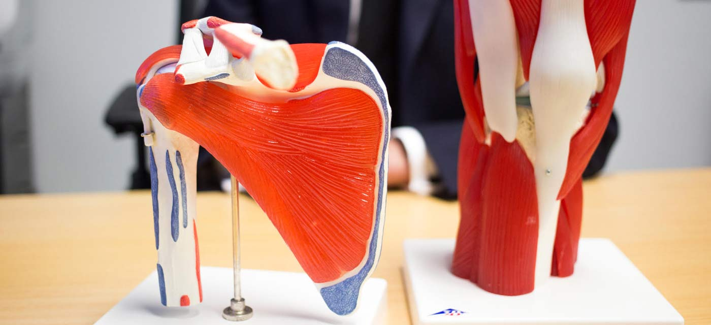 Orthopaedic models at The Orthopaedic Clinic